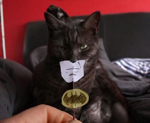 El gato batman