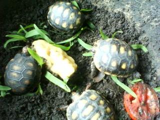Nacimiento de tortuguitas
