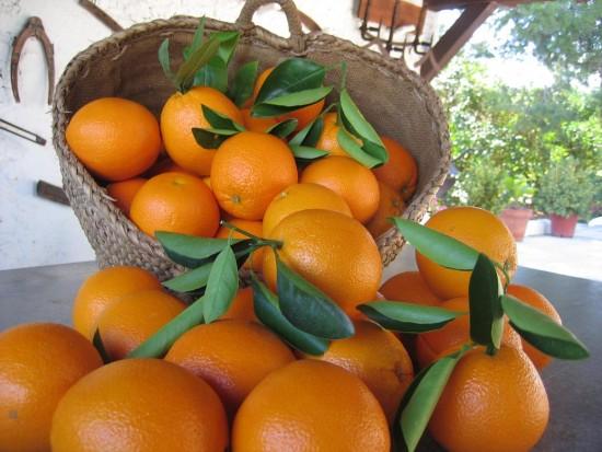 Las naranjas son un alimento clave para una dieta equilibrada y saludable