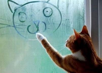 Autorretrato felino