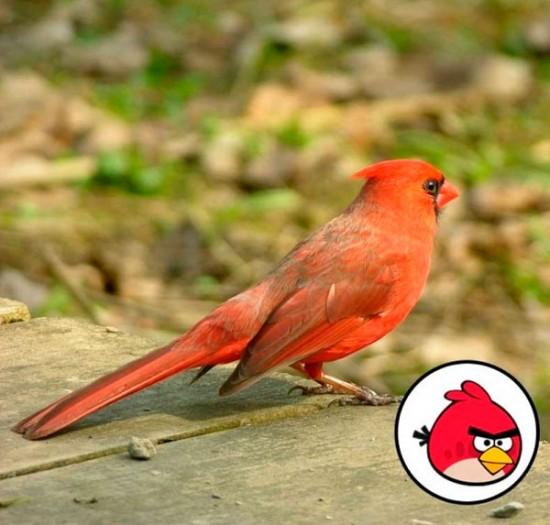 Angry Birds, los pájaros en la vida real