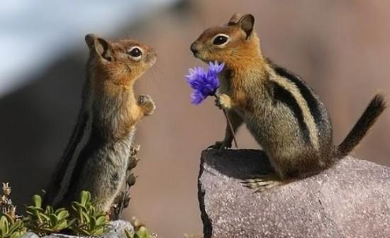 Ardilla disculpándose con un ramo de flores