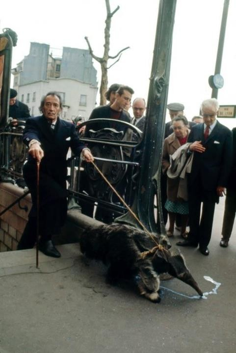 Dalí paseando un oso hormiguero