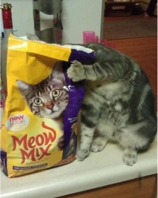 Gato creativo