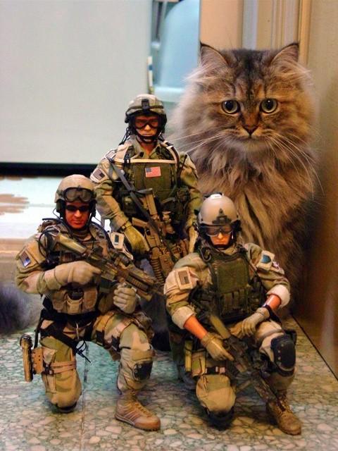 Gato militar