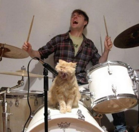Gato rockstar