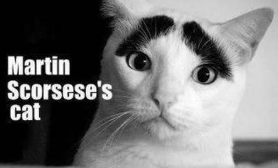 El gato de Martin Scorsese