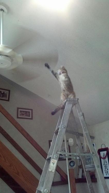 Gato y ventilador (mala combinación)
