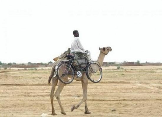 No sin mi camello