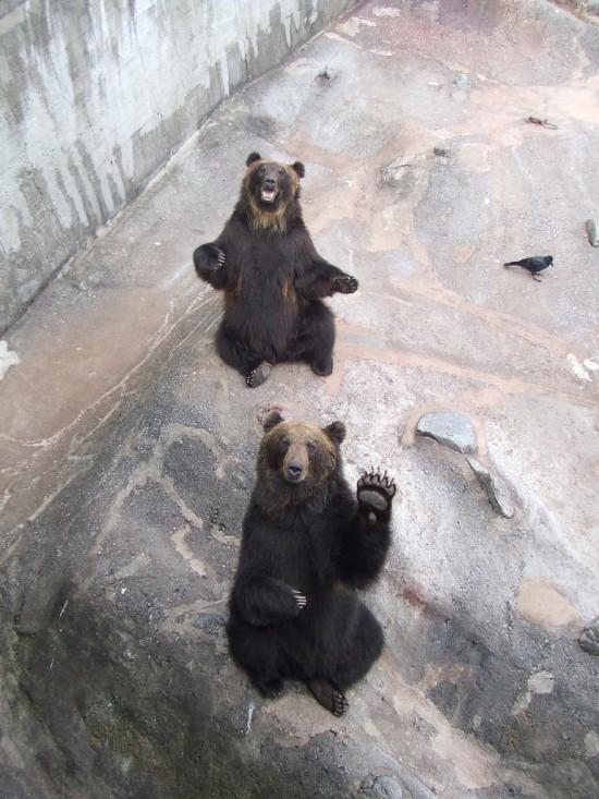 Hola amigos, dicen los osos