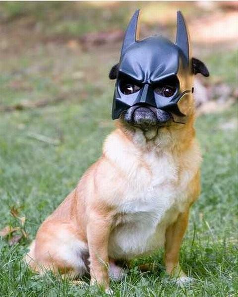 Mascotas disfrazadas de Batman