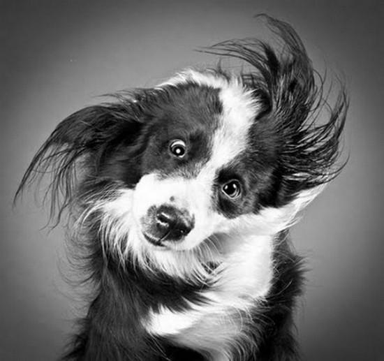 Perros en stop motion