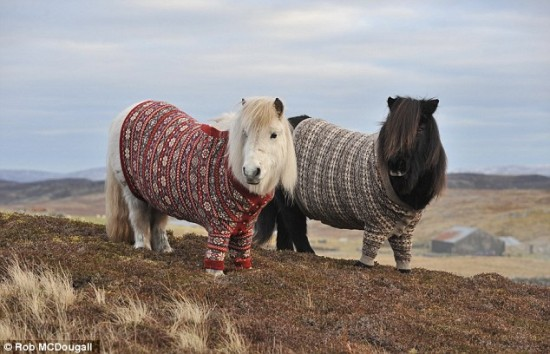 Ponys con jersey