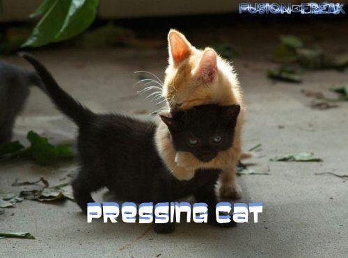 Pressing cat