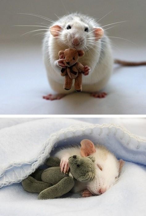 El ratón y su peluche