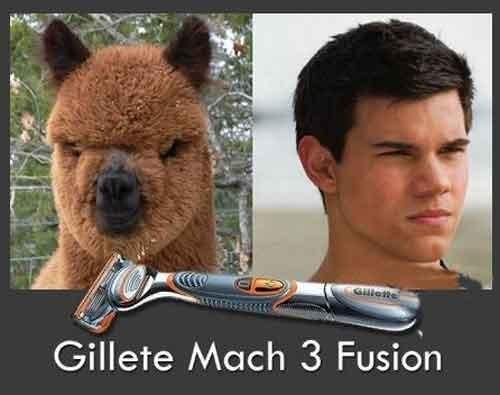 Resultados maquinilla de afeitar
