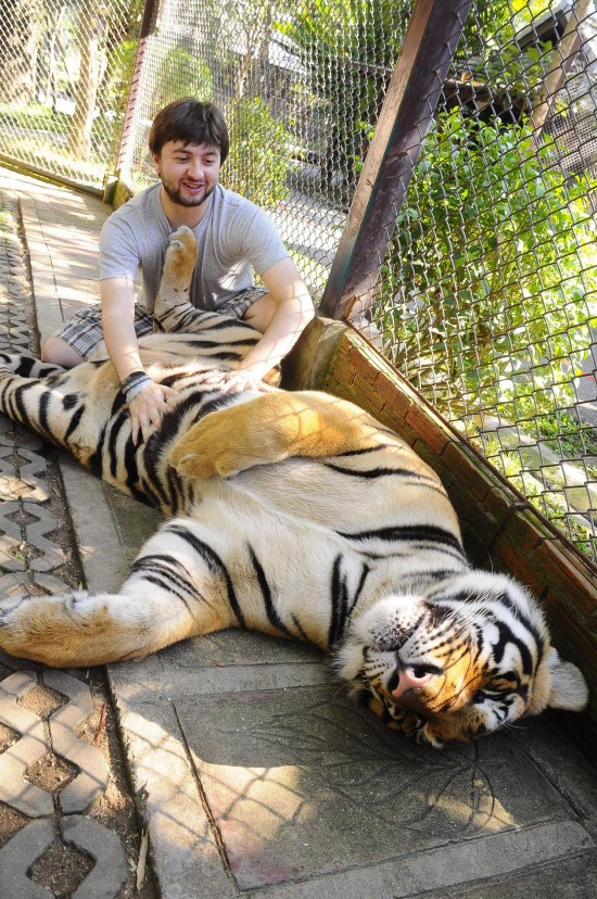 Al tigre le da gustirrinín