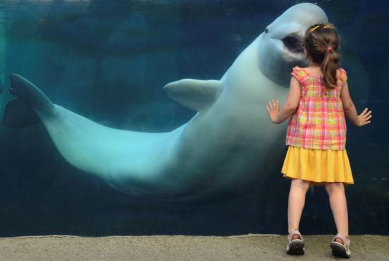 Beso con la ballena