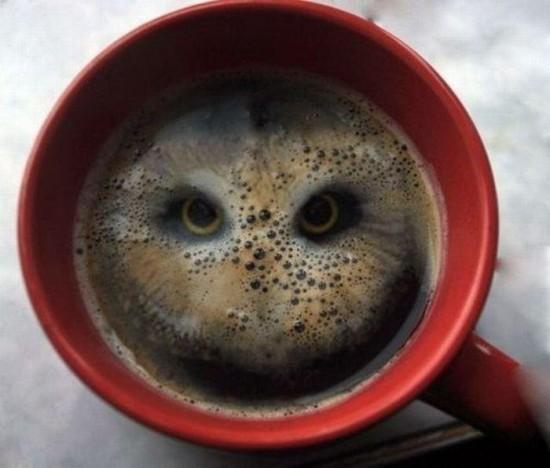 Café lechuza