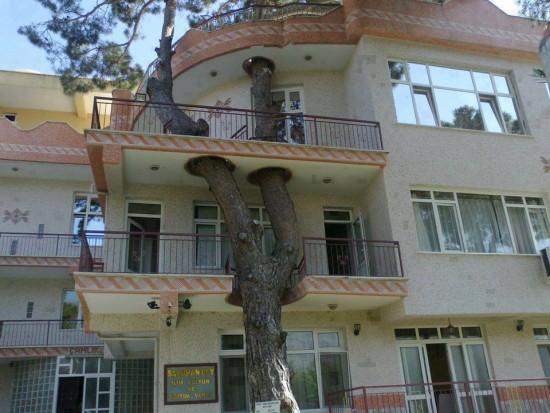 Casa con árbol