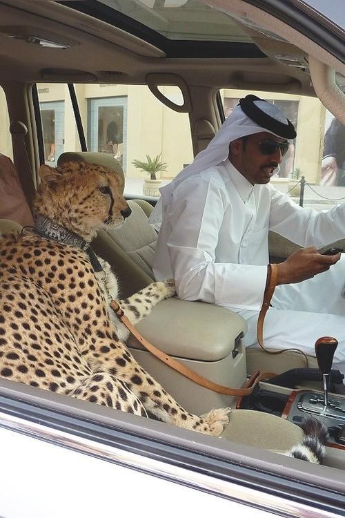 Copilotos en países árabes