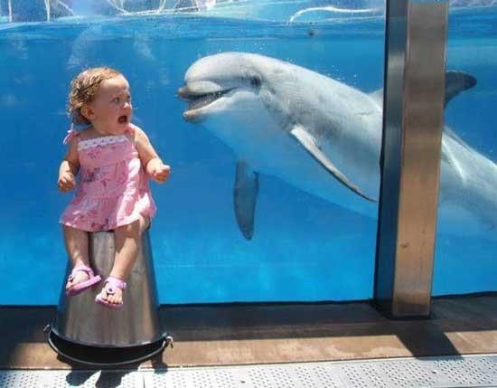 Delfín malvado
