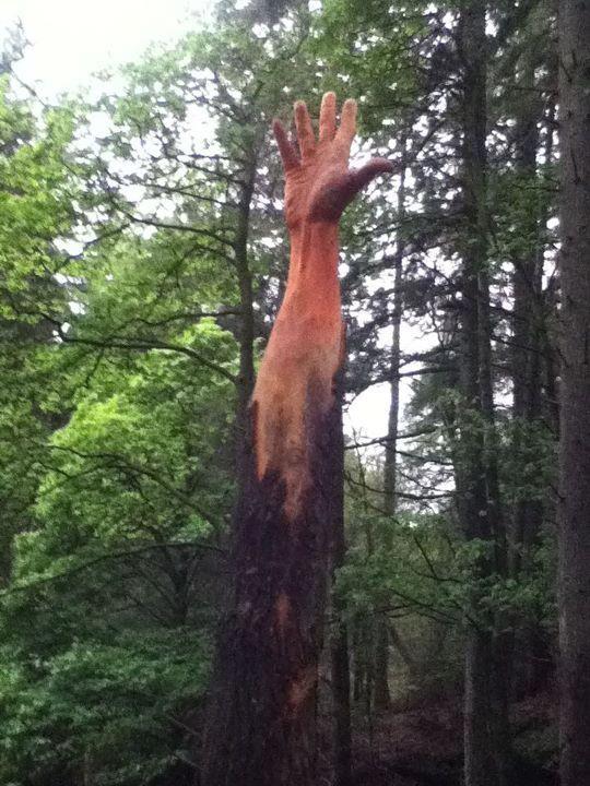 Evolución de un árbol