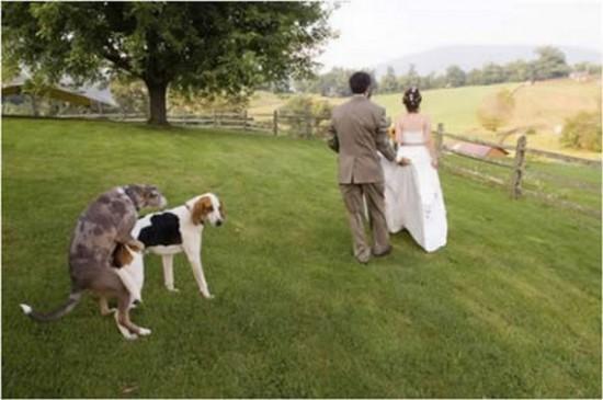 Instinto animal en boda tradicional