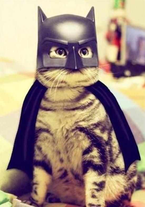 Gato disfrazado de Batman