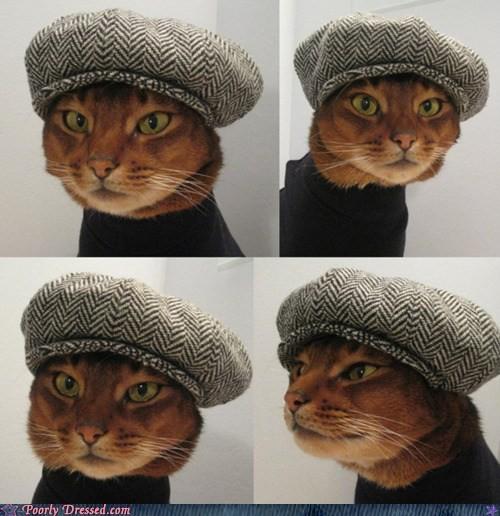 Gato bohemio