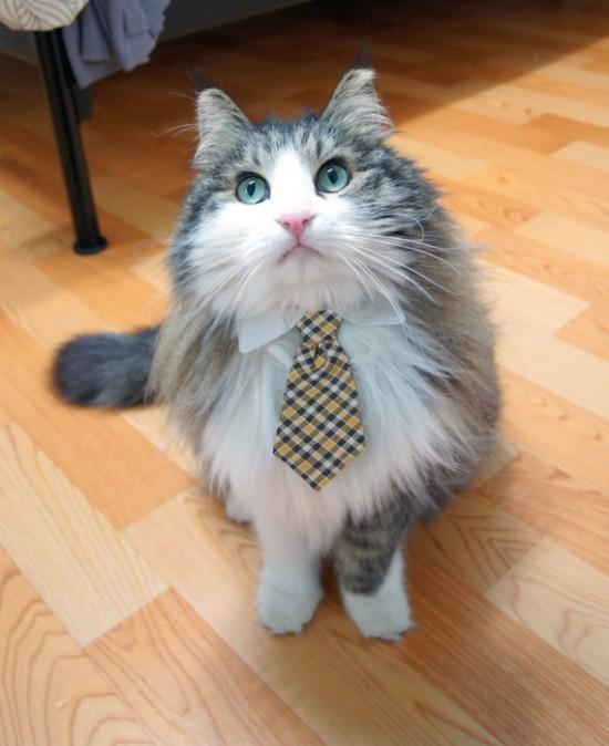 Gato businessman