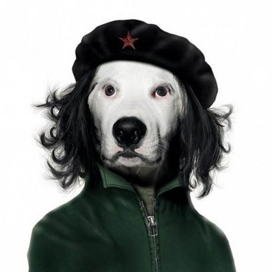 Perro con cara del Che Guevara