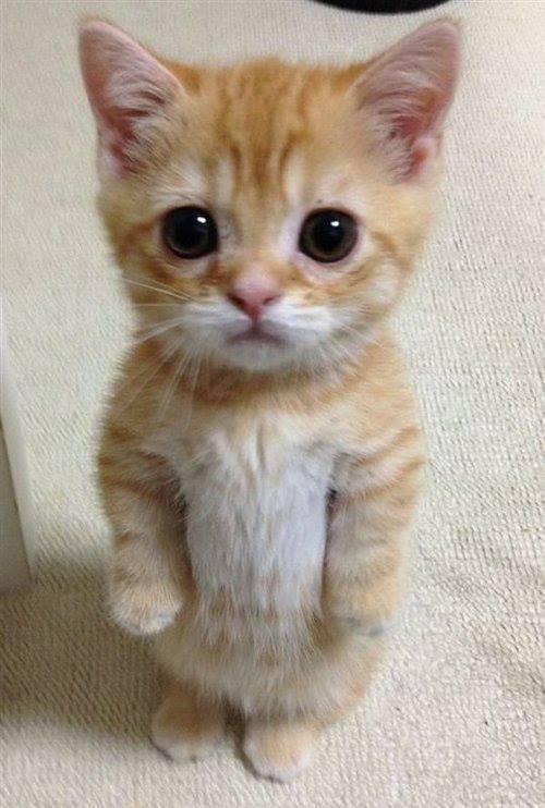 El gato más dulce que jamás has visto