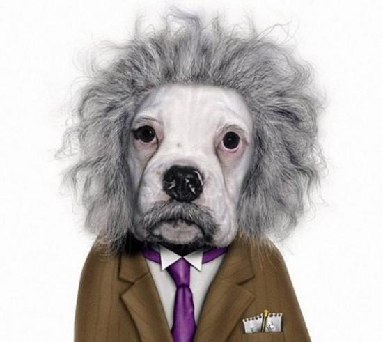 Perro con cara de Albert Einstein