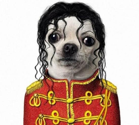 Perro con cara de Michael Jackson