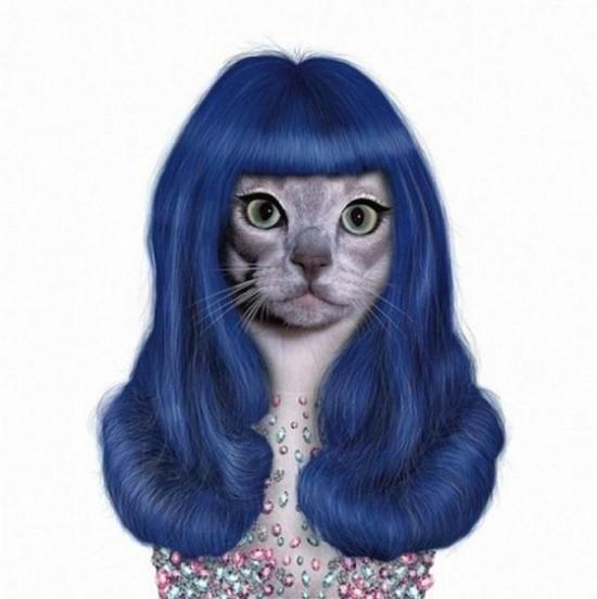 Gato con cara de Kate Perry