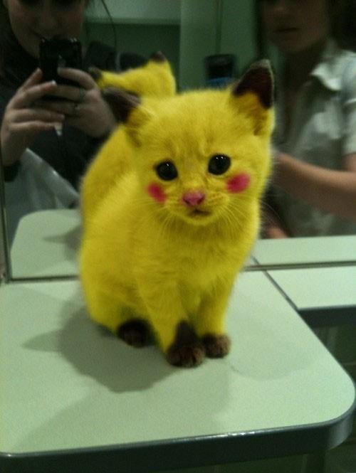 Gato con cara de Picachu