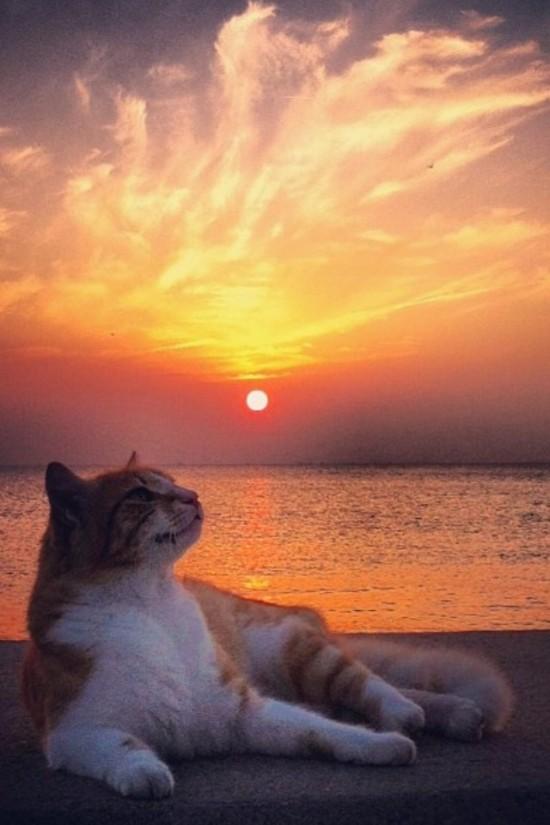 Gato posando en la puesta de sol