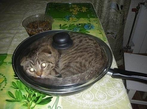 Gato en la sartén