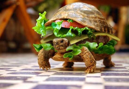Hamburguesa de tortuga