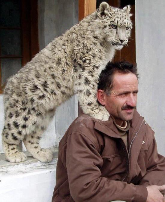 Mi mascota es un leopardo
