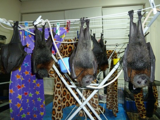 Murciélagos de secano