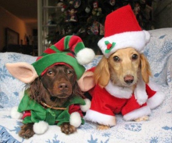 Perritos te desean feliz navidad