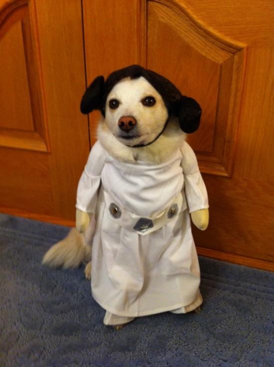 Perro disfrazado de princesa Leia