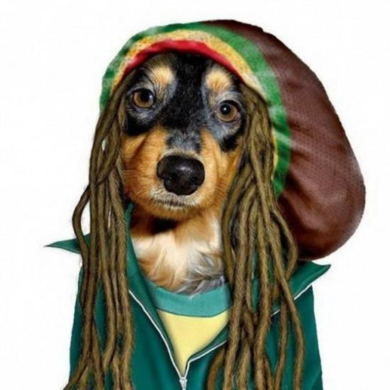 Perro con cara de Bob Marley