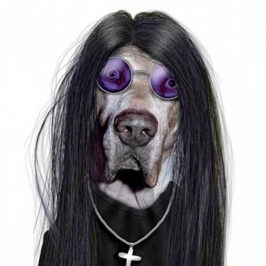 Perro con cara de Ozzy Ousbourne