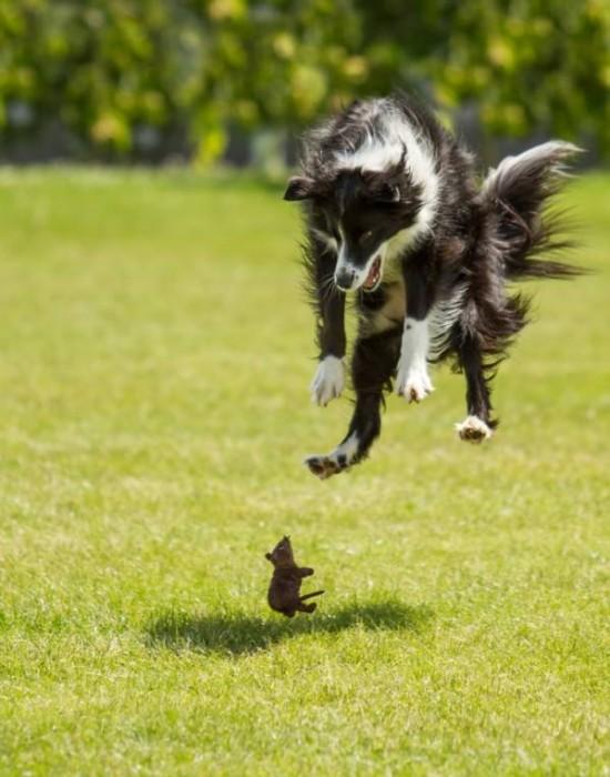 Perros y ratones