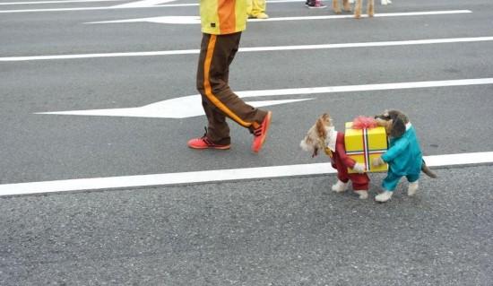 Perros llevando un regalo