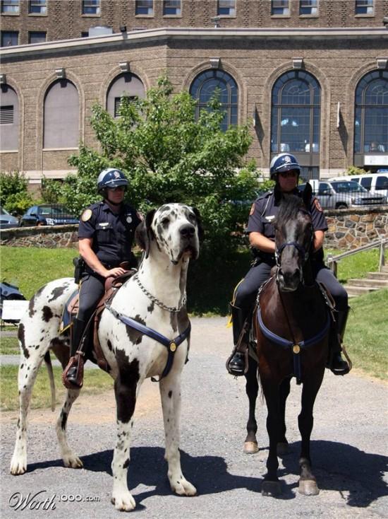 Policía montada... a perro!!