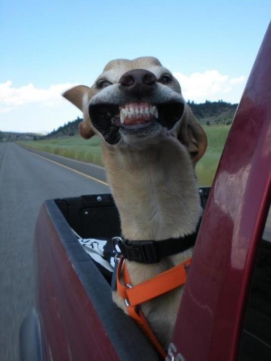 Sonriendo al fotógrafo!!
